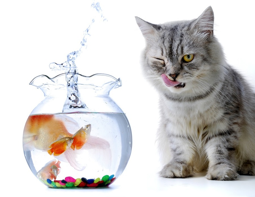goldfish cat fishbowl